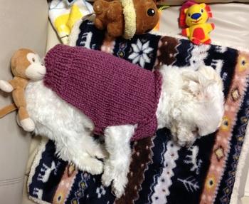 sweater uekara.jpg